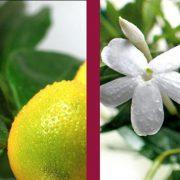 Onguent de Jeunesse aux 7 Plantes Chinoises Peaux Normales-397